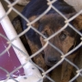 Adopters needed after owner surrenders more than 3 dozen dogs, other animals