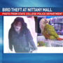 State College police investigate theft of bird from store