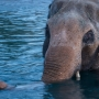 Oregon Zoo suspends TB treatment for Packy, 'weighs next steps'