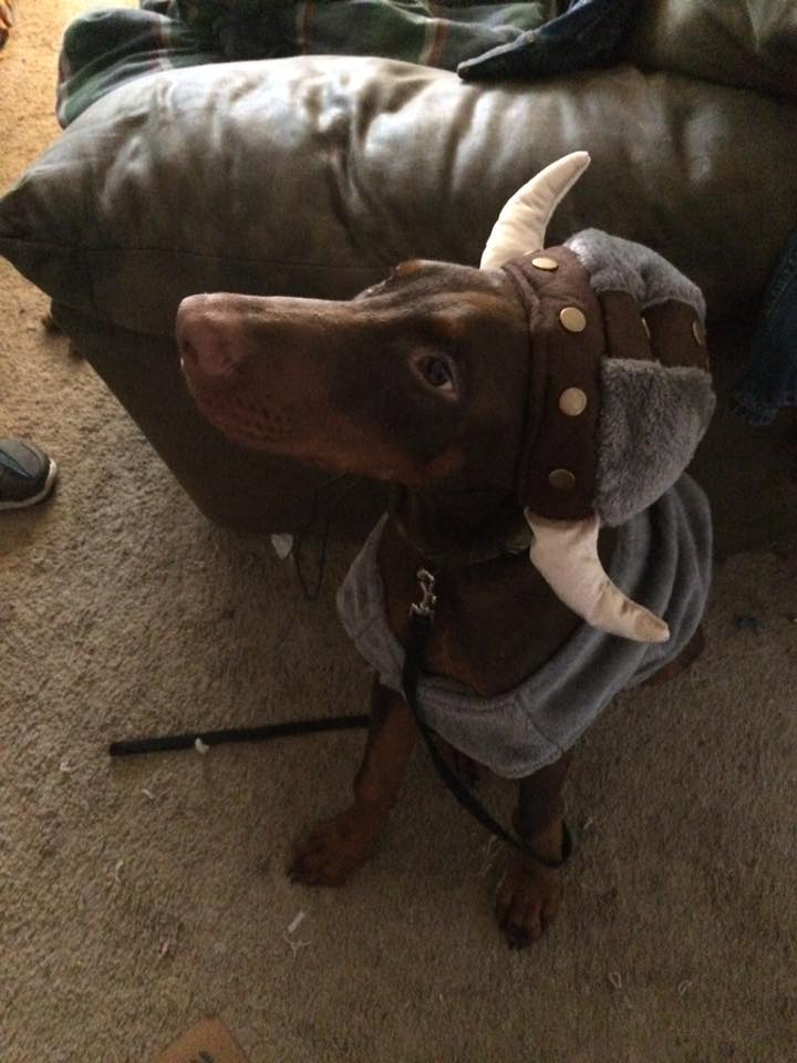 Tracy Ensley's viking dog is ready to face the trick-or-treaters