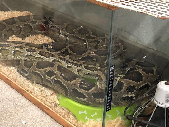 Reptile rescue guy says he didn't abandon dozens of exotic animals, he had a heart attack (Photo: Cristina Flores/ KUTV)