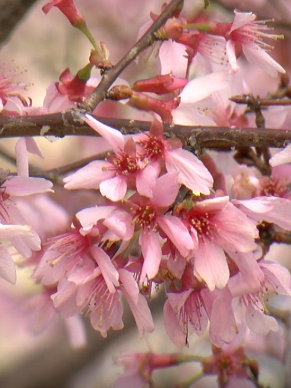 Цветотипы теплая весна и теплая осень | TrendyTips | 1280x960