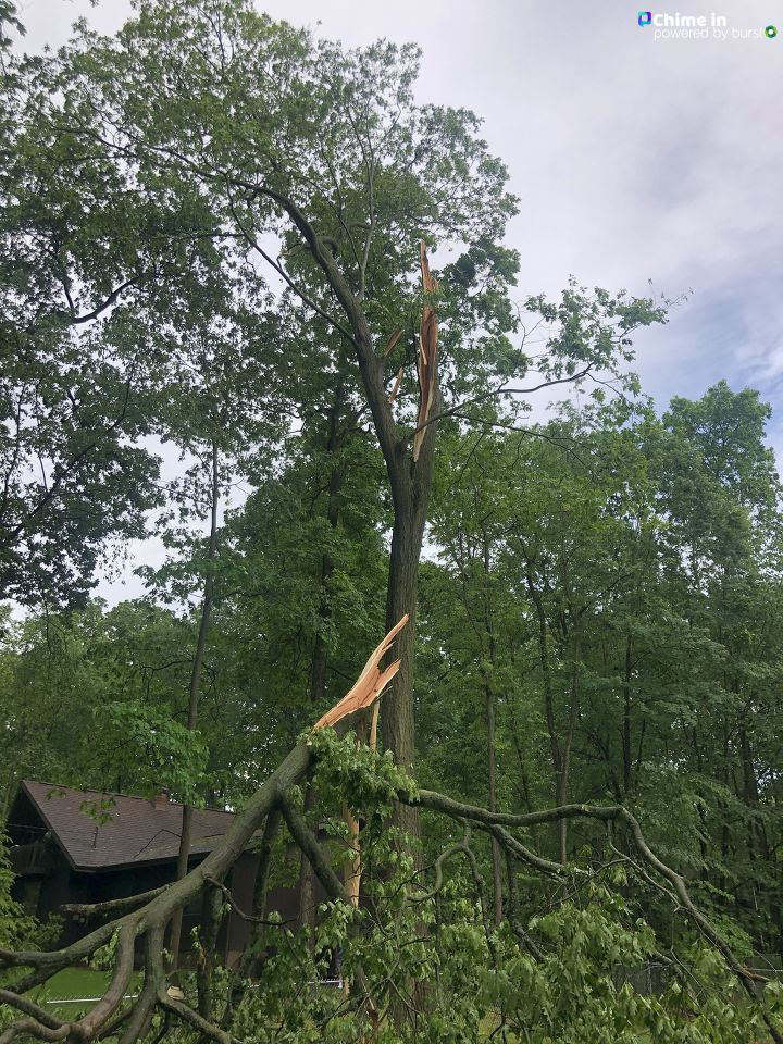 The top of this tree in the West Lake area of Portage, Michigan, lost its battle with the wind during the storms June 10-11, 2020. (WWMT/Chime In, Kristin Feister)