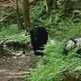 WATCH: North Cascades hiker has close encounter with black bear