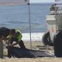 Police: Body of woman buried on beach, with arm above sand