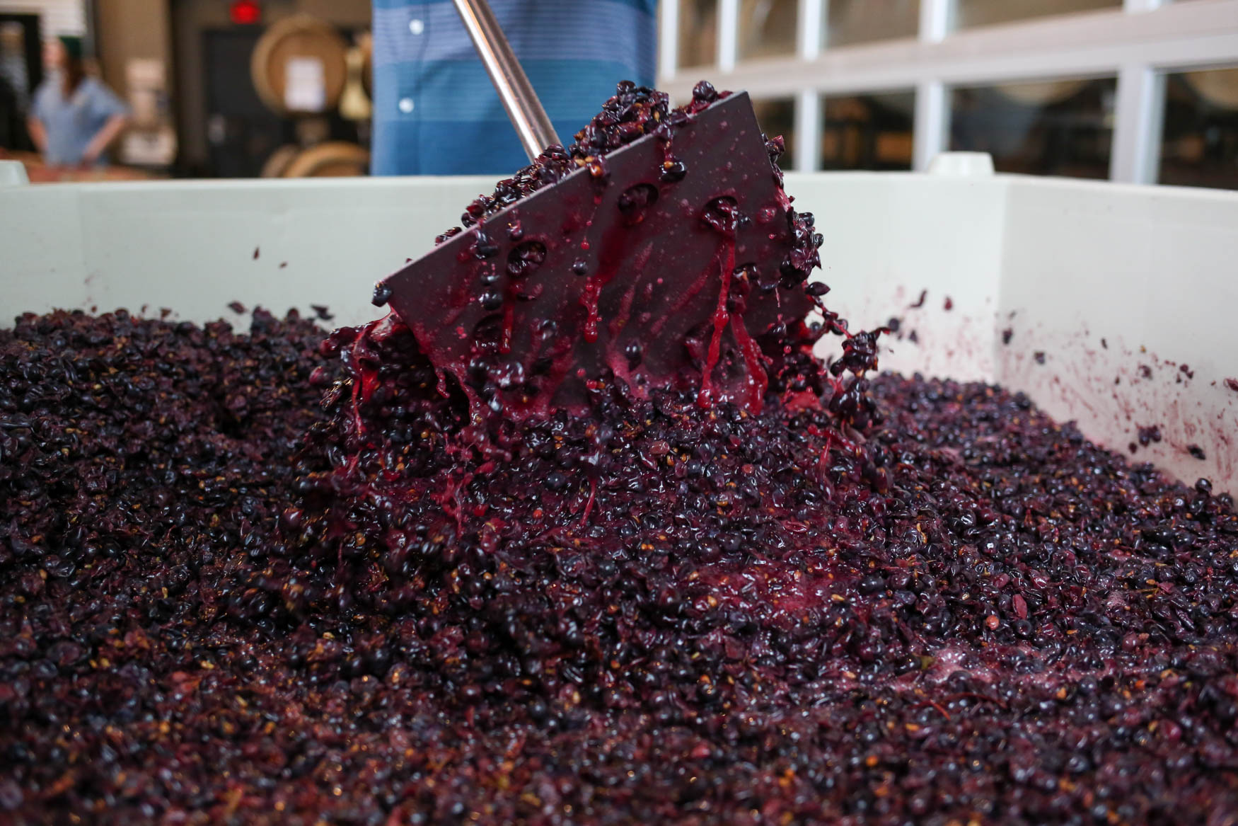 All of the red wine in District Winery's collection was actually made at their other winery - District Winery. However, in winter, District Winery will introduce their made-in-house reds.{ }(Amanda Andrade-Rhoades/DC Refined)