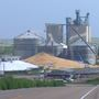 Grain bin collapses spilling over one million bushels of corn