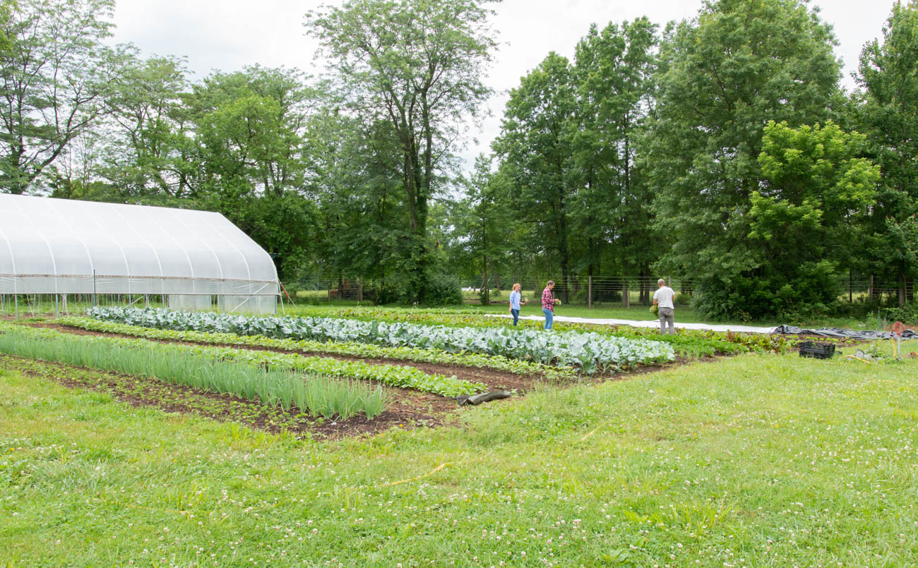 Original to the property, the greenhouse was restored, modernized, and is now used to spur the growing process for the plants at Greenacres. It also serves as the perfect spot for agriculture lessons for children visiting in field trips and summer camps. / Image: Elizabeth Lowry // Published: 6.22.19