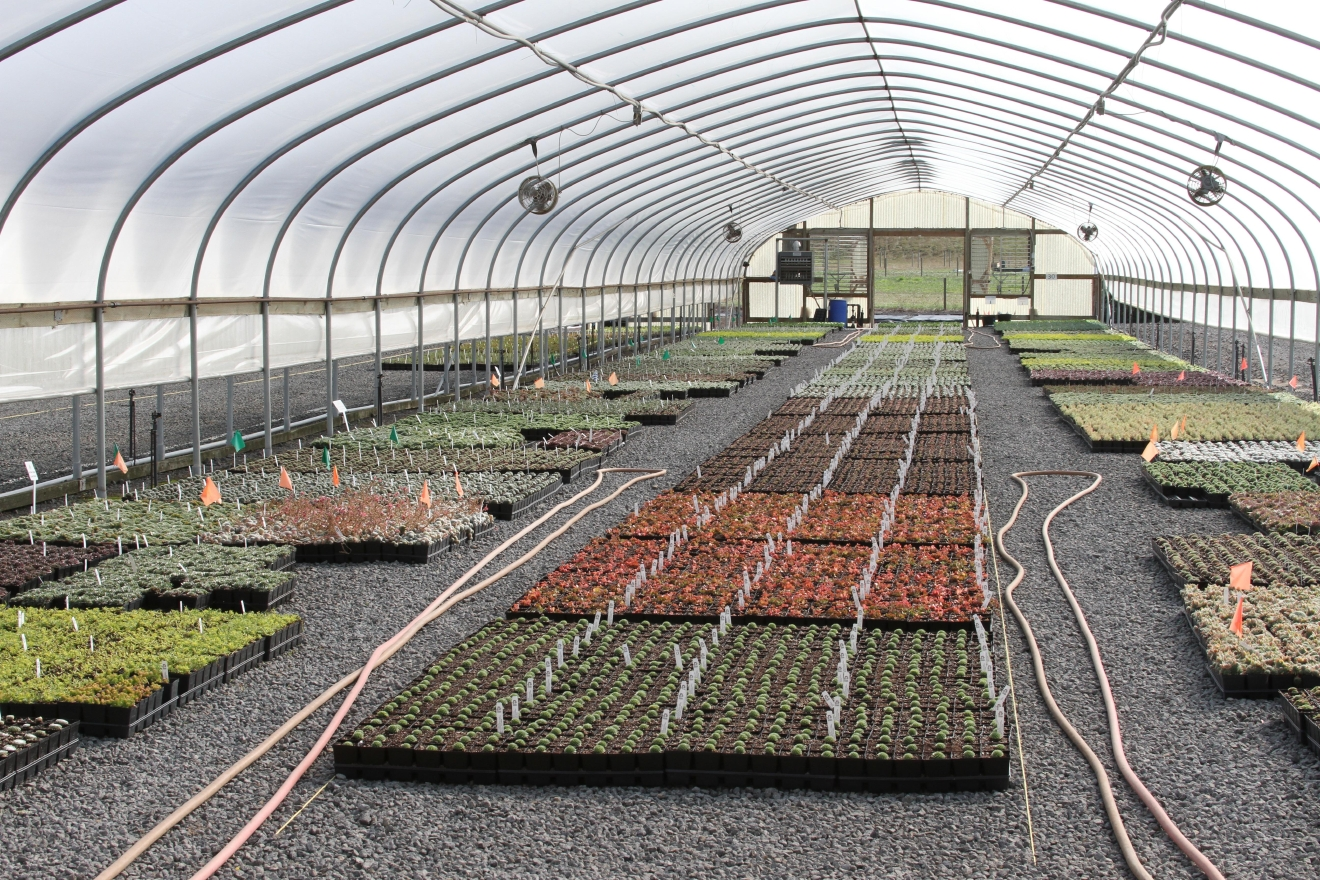 Little Prince of Oregon Nursery in Aurora, Oregon uses greenhouses to extend the growing season.