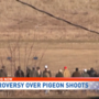 Controversy over Pigeon Shoots