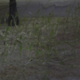 Va. woman finds grass growing through the floor of her apartment
