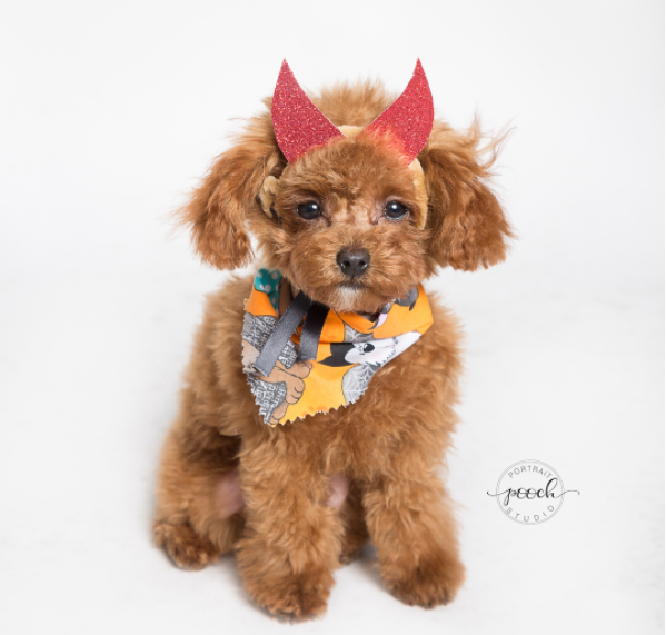 IMAGE: IG user @dcdogmoms via @poochportraitstudio / POST: Just a small sampling of the absolutely amazing photos from Sunday's Howl-o-ween pop-up with @poochportraitstudio! We'll be sharing the rest soon but in the meantime swipe through for a major cuteness overload! It'll be sure to brighten up your #humpday!