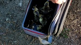 A Mother's Day to quack about: Springfield Police rescue ducklings
