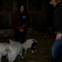 "Grand Rapids couple preparing for ""justice"" after emotional support goats taken away"