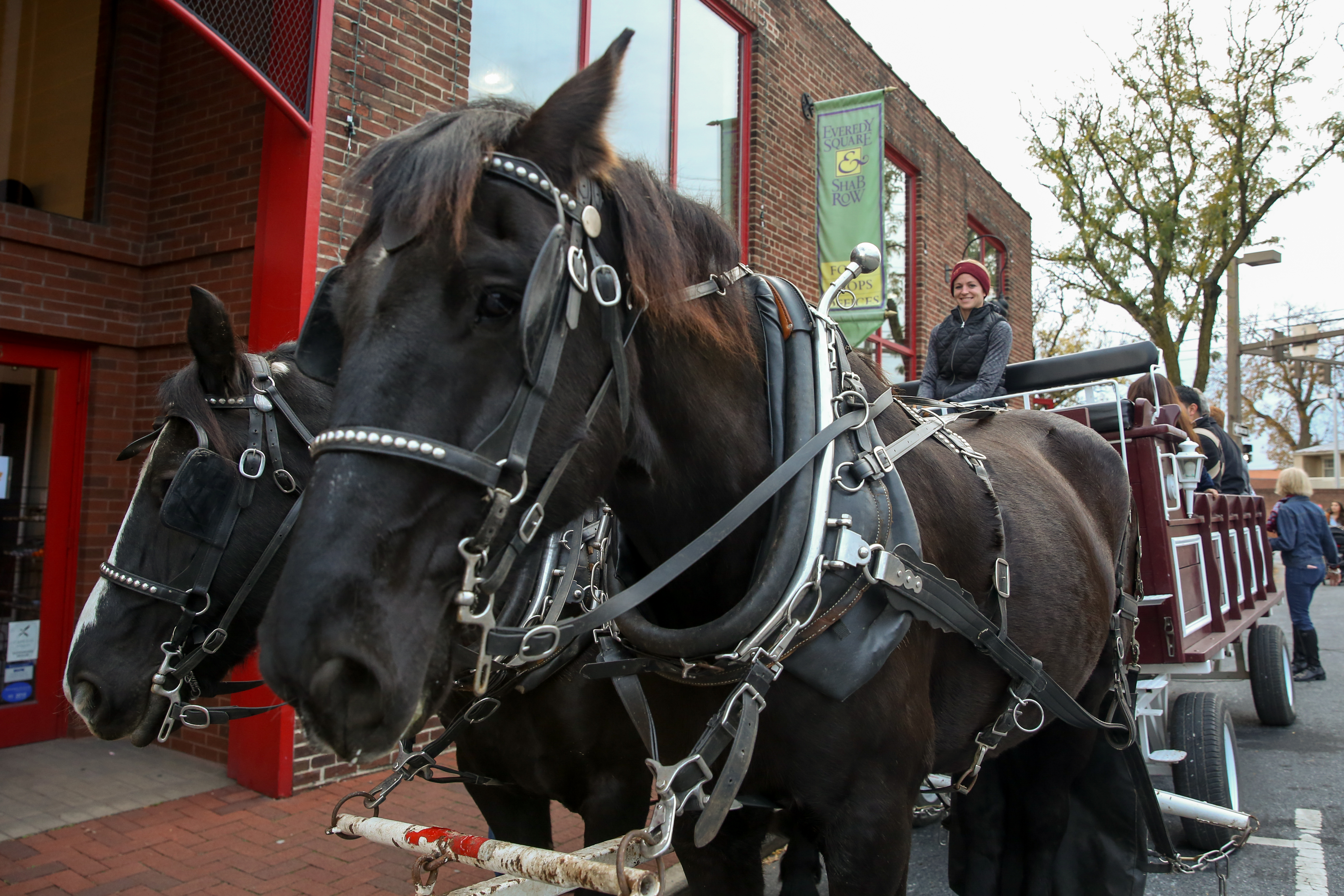 Enjoy a horse-drawn carriage ride around Downtown Frederick. Each carriage ride lasts approximately 20 minutes and can accommodate up to 12 passengers.{ }(Image: Amanda Andrade-Rhoades/ DC Refined)