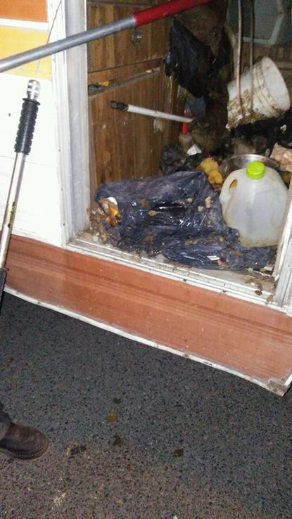 Animal Control finds 34 dogs, 2 chickens living in hot