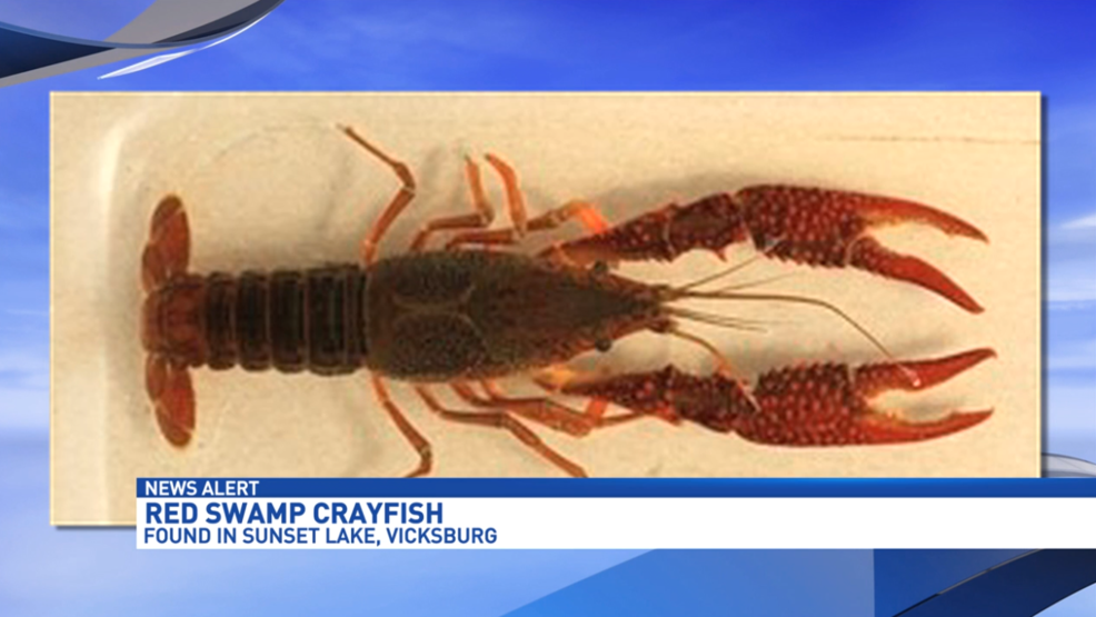 Michigan Dnr Finds Dangerous Invasive Species In Kalamazoo