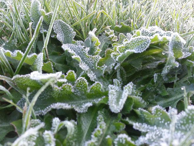 Frosty Surprise in Castle Rock (Photo courtesy YouNews contributor: lee98632)